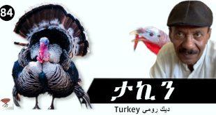Negarit 84: ፖለቲካዊ ታኪን – Political Turkey – ديك رومي سياسي